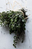 Dried thyme in a bundle