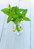 Fresh Mint Sprigs in a Glass of Water