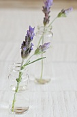 Lavender flowers in vases