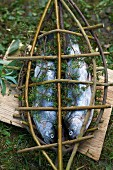Trout in a home-made willow fish basket