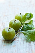 Three greengages with a twig