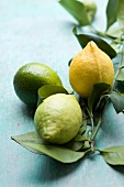 Green and yellow lemons with twigs and leaves