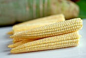 Young, peeled corn cobs