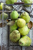 Williams Christ pears in a wire basket (view from above)