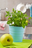 Fresh mint in a flowerpot and a green apple