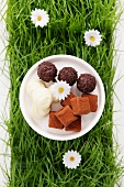 Assorted chocolates in artificial grass