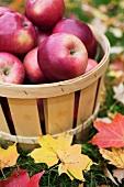 Korb mit frisch gepflückten Äpfel auf Wiese mit Herbstlaub
