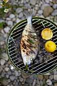Barbecued gilt-head bream with fresh bay leaves and lemons