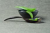 Geschnittene Aloe Vera Triebe mit Schale und Holzlöffel