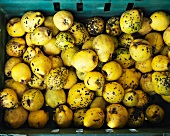 Quinces in a plastic crate