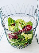 Salad leaves in a wire basket