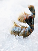 Two prawns on crushed ice
