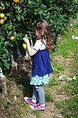 A Little Girl Picking Apples on a Sunny Day