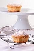Vanilla muffins sprinkled with icing sugar