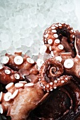 Pacific Octopus on Ice; Close Up