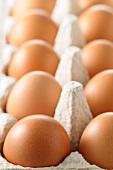 Braune Hühnereier in Eierkarton (Nahaufnahme)