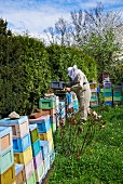 A bee-keeper wearing a bee-keeper's hat in front of stacked beehives