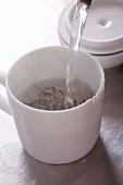 Pouring water on jasmine tea leaves