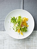 Summer salad with pickles, radishes, peppers and egg