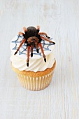 A cupcake decorated with a spider