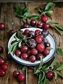 Assorted plum varieties with leaves on an enamel plate