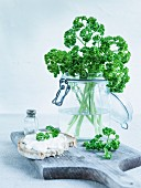 Curly-leaf parsley in a storage jar, a slice of rustic bread with herb quark and fresh parsley