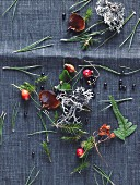Forest fruits, twigs, leaves, lichens and pine needles