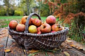 Apples in a harvesting basket on a wooden table in an autumn garden