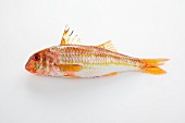 Red mullet on a white surface