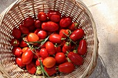 Cocktail tomatoes in a basket