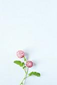Two radish flowers