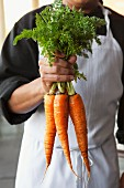 Chef Holding a Bunch of Fresh Carrots by the Greens