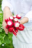 A woman's hands holding a bunch of radishes
