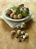 Fresh brown mushrooms with soil and rosemary