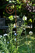 A decorative metal rod as a garden ornament