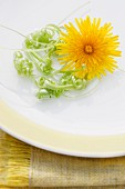 Curled dandelion stems and a flower on a plate on a placemat