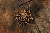 Caraway seeds on a wooden surface