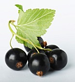 A bunch of blackcurrants against a white background