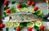 Grey mullet on lemon slices