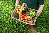 A farmer holding a basket of organic vegetables (view from above)