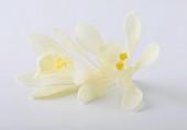 Two vanilla flowers