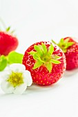 Strawberries and a strawberry flower