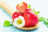 Strawberries with a strawberry flower on a wooden spoon