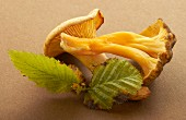 A chanterelle and a mushroom