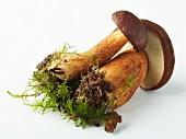 Two bay boletes