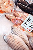 Red mullet and mussels at the market