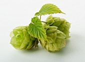 Three hop umbels