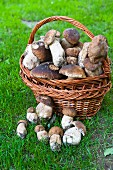 Ceps in basket, close-up