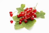 Redcurrants on a leaf