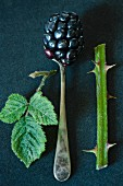 blackberry on a spoon with a leaf